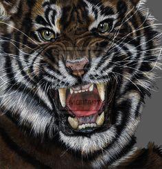 Tiger by Balu90