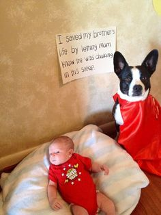 """This dog is a hero!  """"Baby Benjamin has some bad acid reflux and spits up often. Mom put him in his swing to nap while she went to feed his big brother lunch. Ben was just out of sight when our Boston Terrier-border collie mix started whining and barking to get Mom's attention - Baby Ben was choking in his sleep."""""""