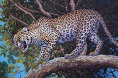 Fine art illustration of all extant species of Panthera Pardus