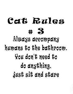 cat rule #3