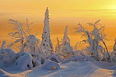 Frozen taiga forest in Finland...The Taiga is the greatest forest on Earth, containing at least a third of all the world's trees.