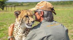 The Cheetah at Kwa Cheetah outside Ladysmith in South Africa Cheetah, South Africa, Cowboy Hats, The Outsiders, Wildlife, Nature, Western Hats, Cheetahs, Naturaleza