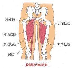 美脚の条件は太腿の内側の隙間!内もものすき間を短期間に作る内もも締めエクササイズで1週間で美脚にしましょう! …