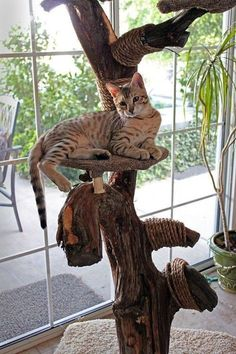 DIY -- Homemade Cat Tree - the cats would go CRAZY for one of these! Cool Cats, Diy Cat Tree, Cat Towers, Photo Chat, Cat Enclosure, Cat Room, Cat Condo, Animal Projects, Cat Furniture