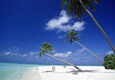 Kho Samui, l'isola delle palme. Sceglila su: http://www.giroilmondo.net/it_IT/home.html