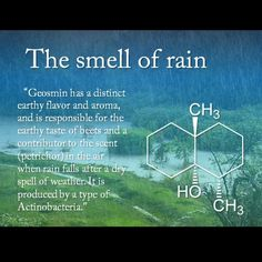 The science behind the smell of rain. I knew it! I get looked at funny every once in a while when I say it smells like it's gonna rain. Let me introduce you to Science, ladies and gentlemen :) Earth Science, Science And Nature, The More You Know, Good To Know, Weird Facts, Fun Facts, Smell Of Rain, Science Facts, Life Science