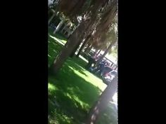 Black Girl at FAU freaks out in class and gets tazed by cops [ORIGINAL]     Over 2000 Free FULL Movies and Television - Anton Pictures  www.YouTube.com/AntonPictures