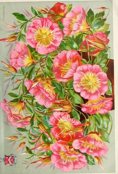John Lewis Childs Catalogue -  New, rare and beautiful flowers 1892