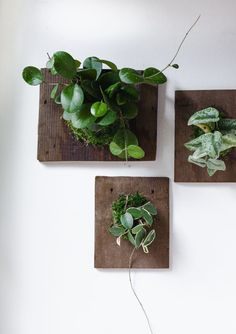 DIY Wall Mounted Plants AKA Living Art Read the full article on A Beautiful Mess Diy Wand, Faux Plants, Indoor Plants, Indoor Garden, Hanging Plants, Framed Wall Art, Wall Art Prints, Bike Wall Mount, Plant Wall Decor