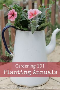 How to Plant Annuals - great tips!