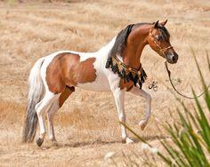 mini horses - Buscar con Google