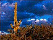 saguaro NP, Utah