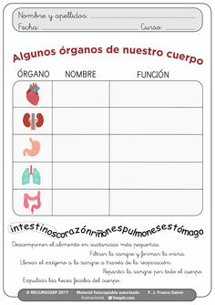 Human Body Activities, Pe Activities, English Activities, Halloween Activities, Classroom Activities, Human Body Systems, Elementary Science, Science And Nature, Third Grade