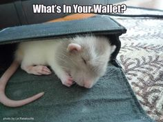Baby rats are so cute it hurts!