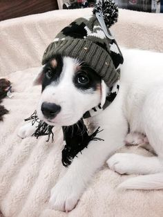 This #puppy is all bundled up for winter. little puppies, dog photos, dog cat, hat