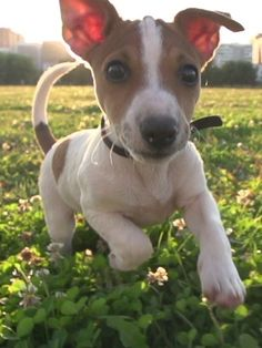 Or maybe a happy buddy frolicking through the clovers? | 22 Adorable Animals Just Being Really Friggin' Cute