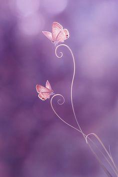 *Purple