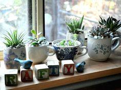 Succulent Teacups