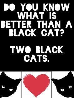 Black cats - ❤️