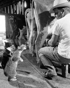 Iz in linz fo mo meow milk