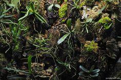 Flowering Plants, Planting Flowers, Miniature Orchids, Bottle Garden, Terrarium Plants, More Pictures, Indoor Plants, House Plants, Beautiful Flowers
