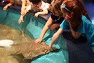 Make connections with sharks, seals, otters, jellies, sea turtles and other amazing animals from the Long Island Sound at The Maritime Aquarium in Norwalk.