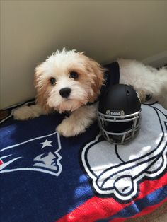 """""""I can't wait for game day!"""" #PETriots #Patriots #Pets #Dogs"""