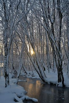 December Snow by Mjollnir MacAlba Winter Love, Winter Snow, Winter Magic, All Nature, Amazing Nature, Winter Pictures, Nature Pictures, Landscape Pictures, Landscape Paintings