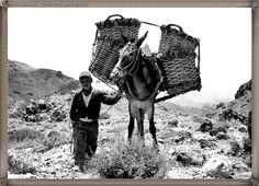 Las Cañadas del Teide año 1960.... #canariasantigua #blancoynegro #fotosdelpasado #fotosdelrecuerdo #recuerdosdelpasado #fotosdecanariasantigua #islascanarias #tenerifesenderos