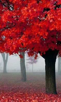 Autumn trees.