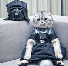 Luke, I am your cat.