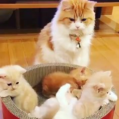 Best Picture For Cutest Baby Animals For Your Taste You are looking for somethin Animal Gato, Amor Animal, Cute Wild Animals, Cute Funny Animals, Cute Kittens, Big Cat Family, Mama Cat, Baby Cats, Beautiful Cats