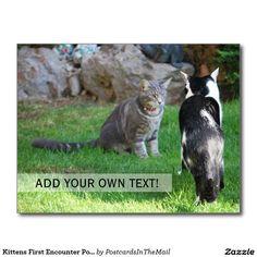 Kittens First Encounter Portrait Postcard