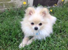 Zima!!!!!!! A cute dog!!!!!!