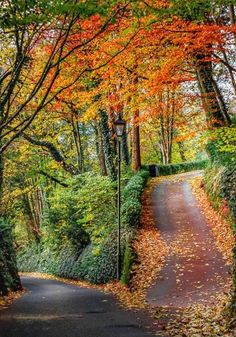 autumn landscape A fork in the road (Devon, England) by Karl Hutchinson / Beautiful World, Beautiful Places, Fork In The Road, October Country, Autumn Scenery, Autumn Aesthetic, Amazing Nature, Beautiful Landscapes, Countryside