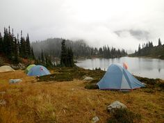 Bear safety tips for hikers and campers