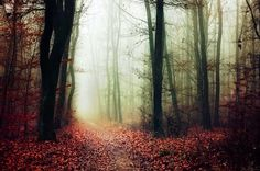 If These Trees Could Talk XVI. by realityDream on DeviantArt