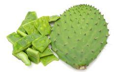 ¡Aplícatela ya! El nopal es una fuente importante de fibra, que además contiene 17 aminoácidos …