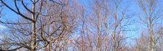 treecaps