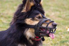 O czym powinniśmy pamiętać, kupując kaganiec dla psa?
