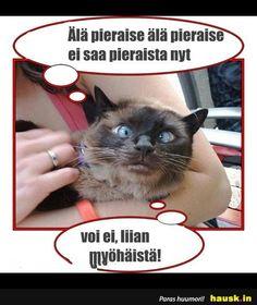 Top 100 - Viikko - HAUSK.in Random, Memes, Cats, Top, Animals, Gatos, Animales, Animaux, Meme