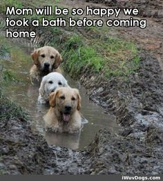 This MUST be what Daisy thinks before she bathes in the mud.