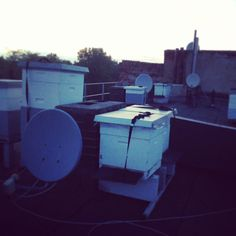 Rooftop Hives bee keeping urban apiary Kassel, Germany