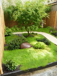Jardin Japonais Erable du Japon Bambous & fougères