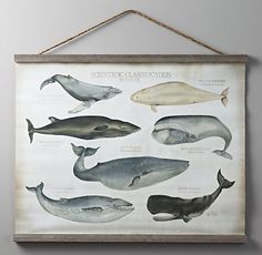 Scientific Whale Tapestry - vintage and classy not childish