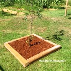 We spend a good amount of time preparing our soil to give our trees the best chance to thrive. We use what we have on the homestead to make a tree border to help contain everything.