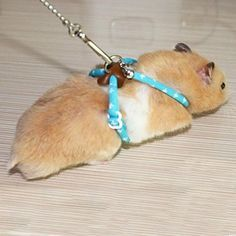 Small Pet Care... Pet Rat Mouse Leash Lead Harness Adjustable Rope Hamster Finder Bell