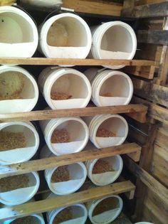 Bucket Chicken Nest Boxes