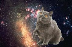 via OMG Cats In Space