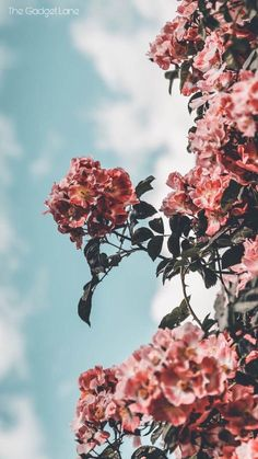 12 Floral iPhone Xs Wallpapers To Celebrate Spring Preppy Wallpapers is part of Preppy wallpaper - Who doesn't love a pretty floral iPhone X Wallpaper Let's celebrate Spring together and get yourself a cute new iPhone Wallpaper today!